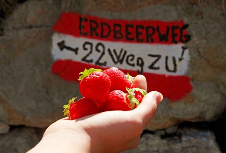 Südtirol Erdbeerweg
