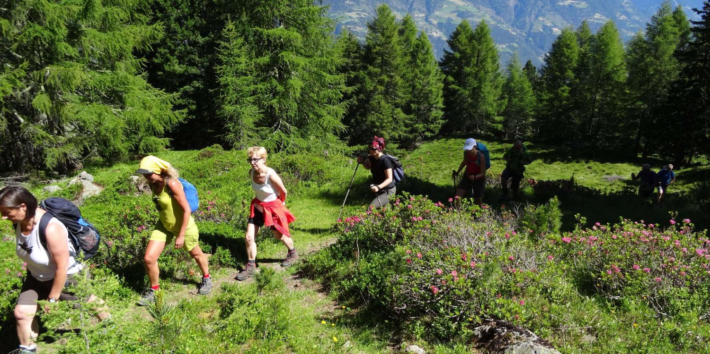 Wandertour: Aschbach-Vigiljoch-Naturnser Alm